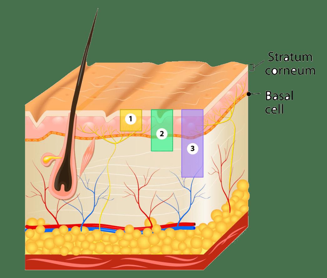 Skin-Rejuvenation1